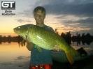 Armand - 13.3kg