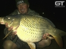 Andre - 10kg Potbelly Common